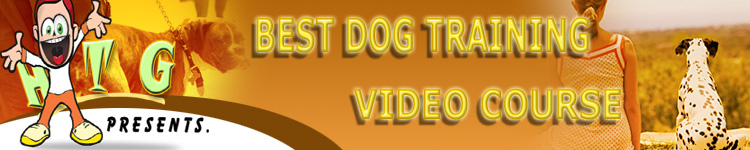 BEST DOG TRAINING VIDEO COURSE