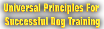 Universal Principles For Successful Dog Training